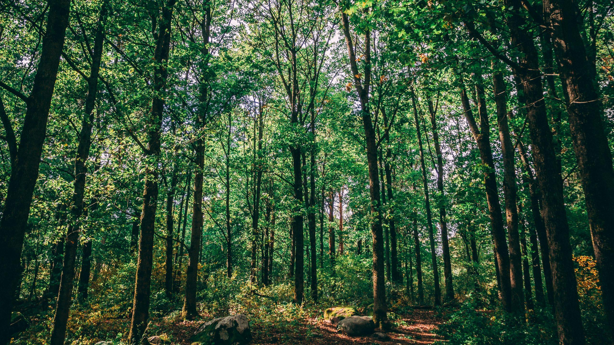 Contribuimos al cuidado y protección de los bosques